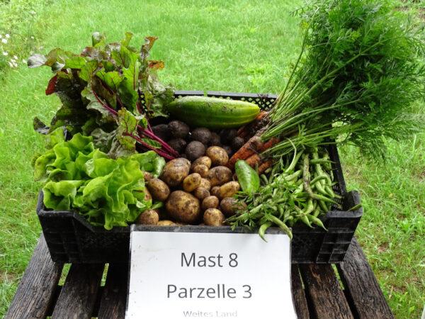 Gemüsekiste aus dem IP-Garten